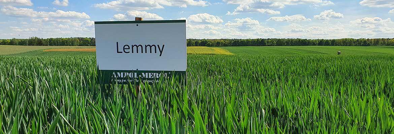 Zabieg T2 i majowa lustracja zbóż