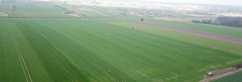 Czwarta lustracja plantacji zbóż w Działdowie