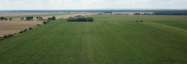 Kukurydza we Wschowie - przegląd zabiegów