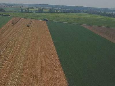 Zbiór kukurydzy w Miłosławiu