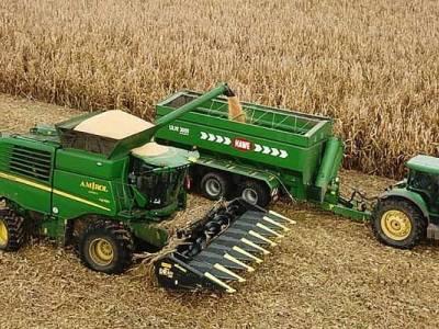 Zbiór kukurydzy w Niedźwiedziu