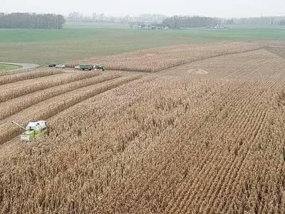 Zbiór kukurydzy w Bukowcu
