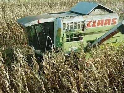 Zbiór kukurydzy w Nowym Lesie