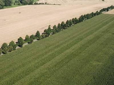 Kukurydza w Sokolnikach - przegląd zabiegów