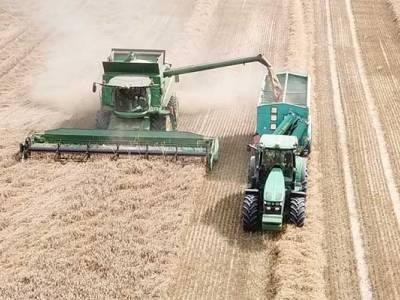 Demo Farma 2020/2021 - podsumowanie żniw rzepaku i zbóż ozimych
