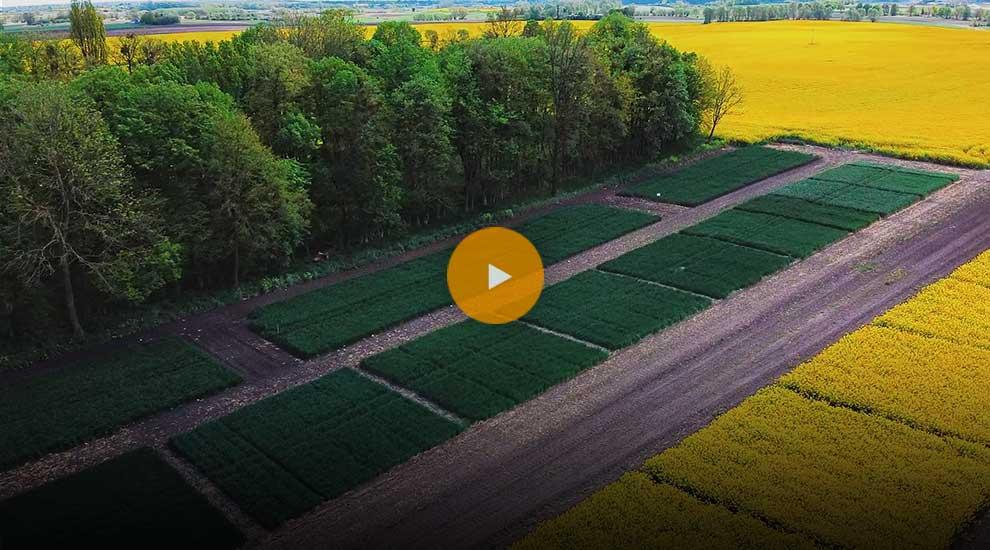 Lustracja pól rzepaku, zbóż i kukurydzy